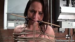 Gagged milf humiliated by euro maledom